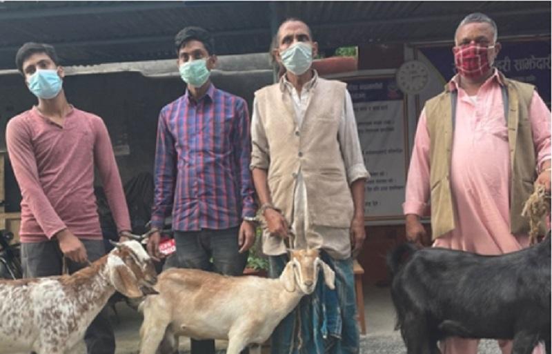 खसीको मासु भन्दै बाख्रीको मासु बेच्ने ४ जना भारतीय पक्राउ